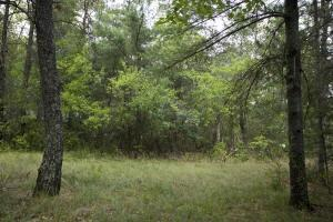 wooded property for sale in big Flats Township