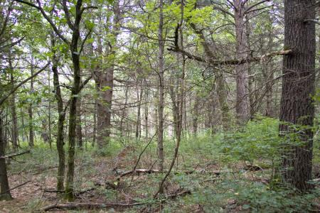 wooded getaway home site in dell prairie township