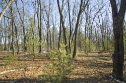 nicely wooded property for sale