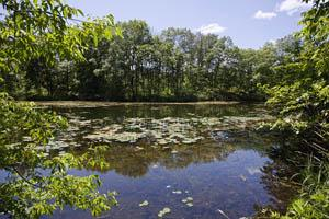 Private Pond Frontage for Sale