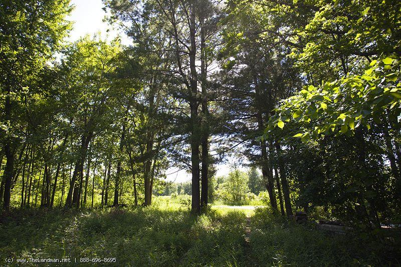10 Wooded Acres by Castle Rock & Lake Petenwell