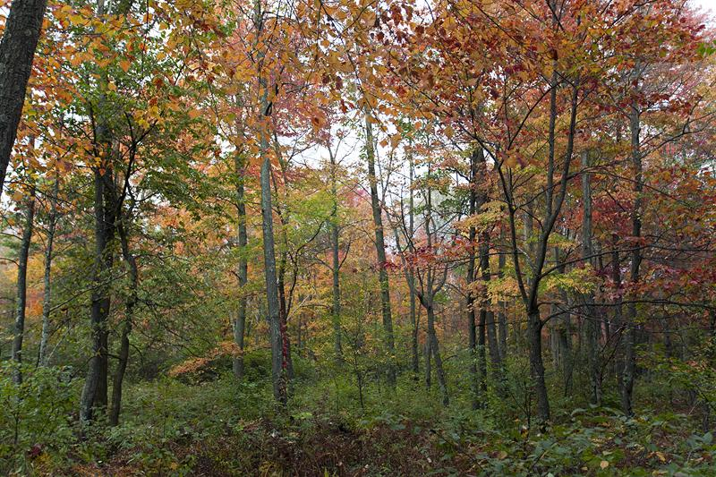 Wisconsin Acreage for Sale