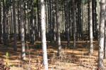 Juneau County, WI Land for Sale
