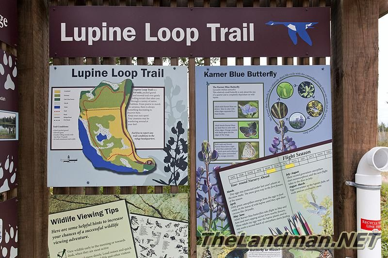 Lupine Loop Trail