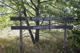 Summerton Bog State Natural Area Photos