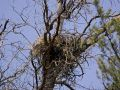 Picturs of an Osprey nest