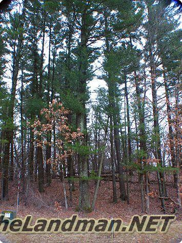 Majestic Pine Acres is located in Monroe Township, Adams County, WI.