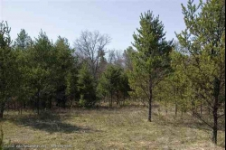 1591999, 1591999 - Fully Wooded 11 Acres With Variety of Trees, WI!