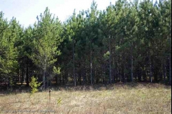 1592000, 1592000 - Central Wisconsin Pine Plantation For Sale, WI!
