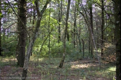 1684135, SOLD! - 1684135 Camping or Building site near Wisconsin Dells