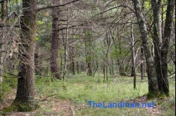 1819337, SOLD! 1819337 - Wisconsin Dells Wooded Building site