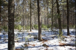 SOLD! -1824561, 20 Acres Red Pine Forest near Lakes