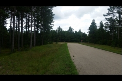 1827704, Mature Pine forest on the ATV Route