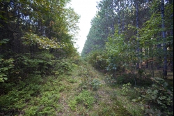 1841515, 20 Acres Woodland for sale
