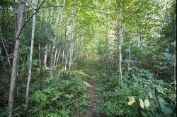 SOLD! - 1841514, SOLD! - 20 Acres near Lakes & Public land for sale