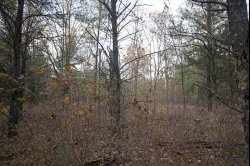 1844841, Almost 10 rolling wooded acres with abandoned primitive cabin