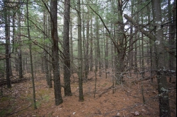 1844840, Private, Wooded acreage with rolling terrain