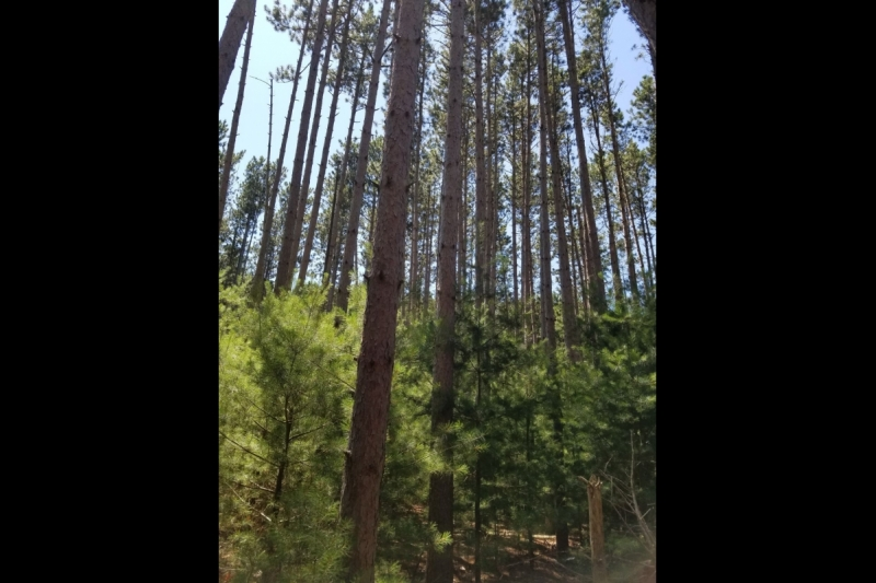 Tall Pines Wisconsin Dells Building Site for Sale