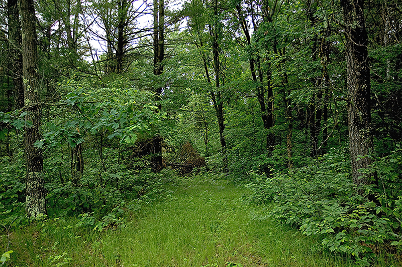 D_800X533_CBW_Green_Trees