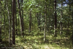 1762249, SOLD! - 1762249-Affordable wooded country parcel