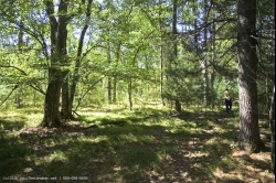 SOLD - 1762270, 1762270-Private wooded acreage close to State Park!