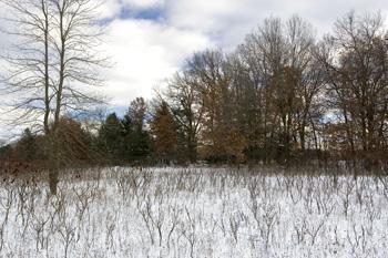 Wisconsin Land For Sale In Adams County