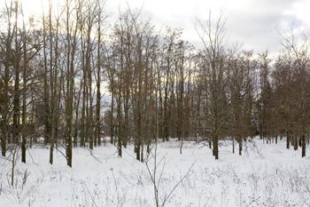 Cheap Central Wisconsin Land For Sale