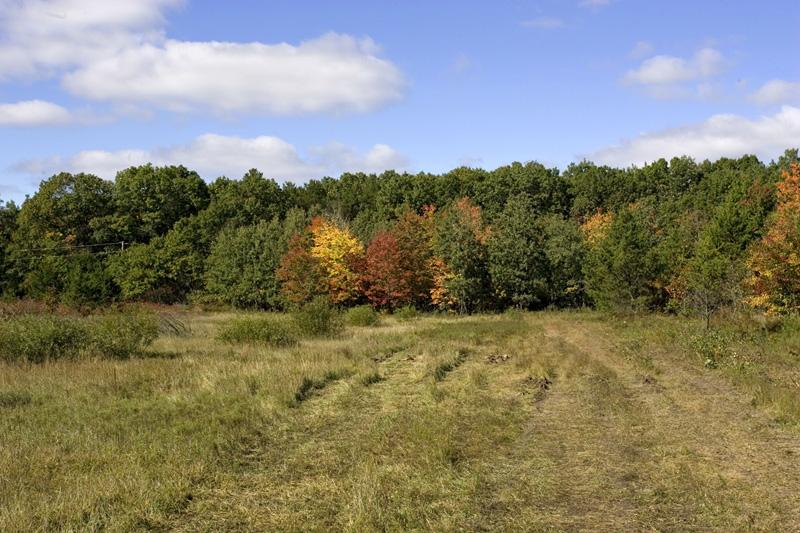 Beautiful Wooded Land With More Available!