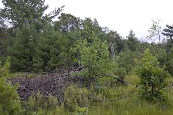 Wooded Land In Quiet Countryside Near Large Fishing Lakes & Streams