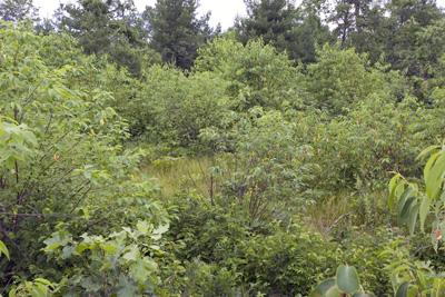 Beautiful Wooded Acreage For Sale In Central Wisconsin
