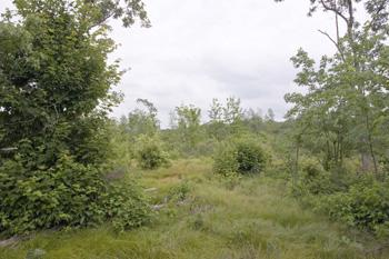 Affordable Land In Adams County - Price Reduced!