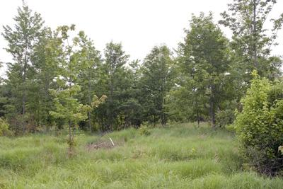 4 Acre Wooded Cabin Site Near Adams-Friendship
