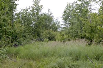 wooded land for sale with more land available