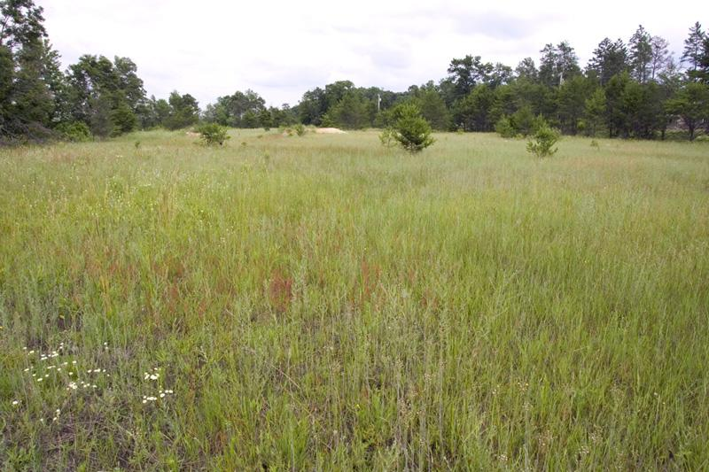 cheap wooded land for sale near public land and atv routes