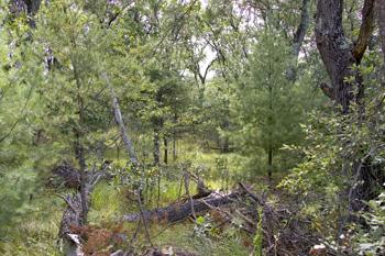 Hunt For Deer & Turkey On Your 5 Wooded Acres