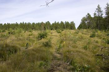 Adams County Land For Sale