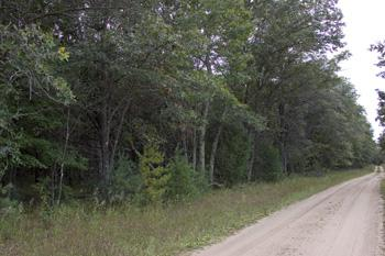 wooded getaway homesite in dell prairie township