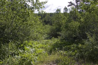 40 Acres Fully Wooded Rare Forest Land For Sale