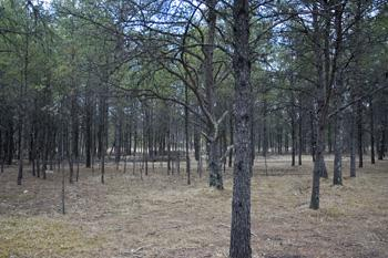 Beautiful Wooded Land For Sale With Mobile