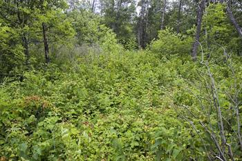 Adams County Wooded Parcel For Sale