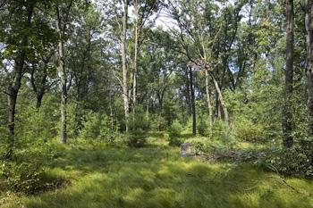 Buildable Level Lot For Sale In Central Wisconsin
