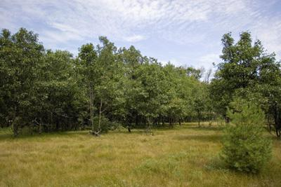 Wooded Land For Sale With Deeded Lake Access