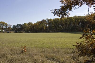 Nicely Wooded Hunting Land For Sale