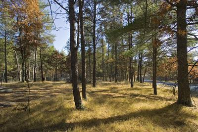 Central Wisconsin Buildable Lot For Sale