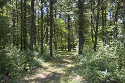 Wooded Deeded Access To Roche-A-Cri Creek
