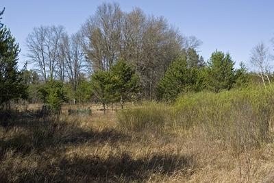 Build your dream home on 8 private, wooded acres