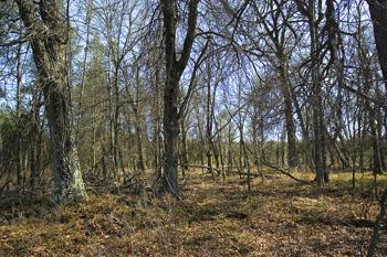 Wooded, Level Land For Sale In Central Wisconsin
