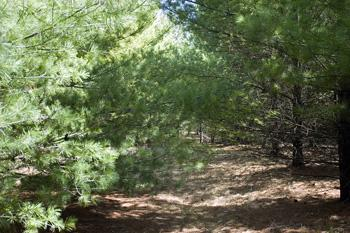 3 Other Available Lots For Sale Near Castle Rock Lake!