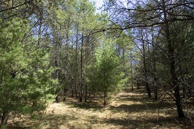 5 Acres Of Real Estate Near State Public Land