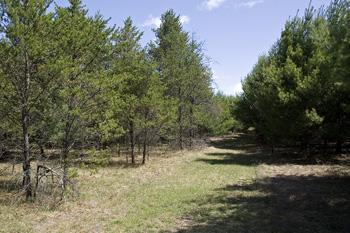 Land Available In Adams Township, Adams County, WI!